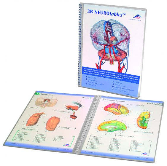 Anatomische Bord : 3B Neuro S0290