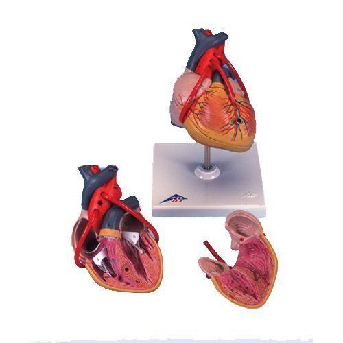 Klassik-Herz mit Bypass, 2-teilig G05