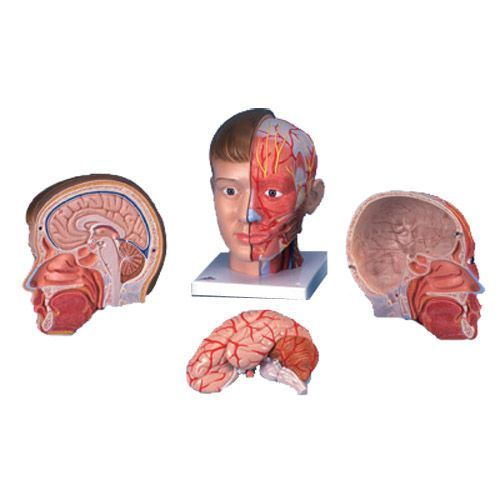 Kopf mit Hals, 4-teilig C07