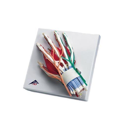 Luxus Hand mit Handgelenk W47005