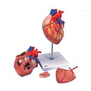 Herz mit Bypass, 2-fache Größe, 4-teilig G06