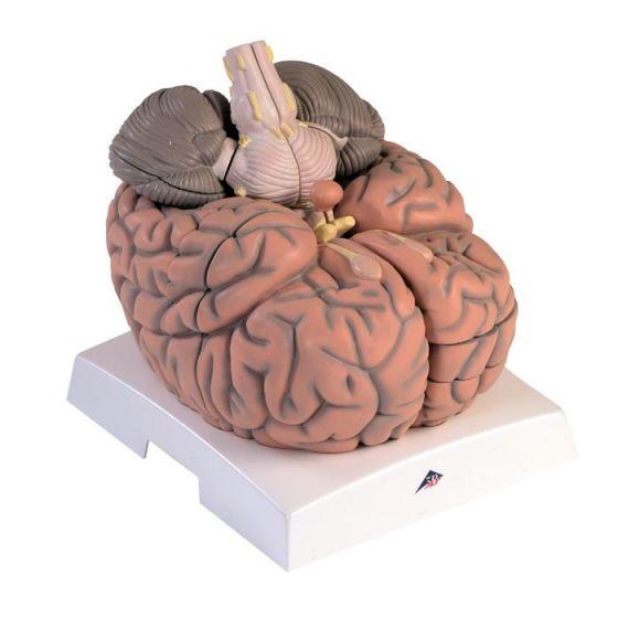 Mega-Gehirn, 2,5-fache Größe, 14-teilig VH409