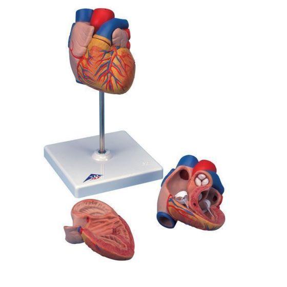 Herz, 2-teilig G10