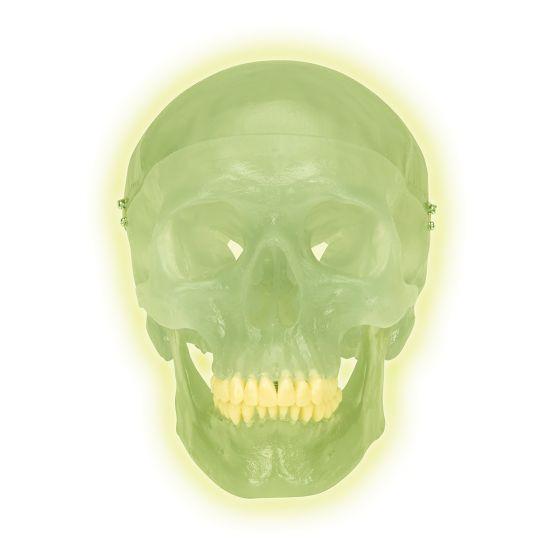 Neonschädel A20/N